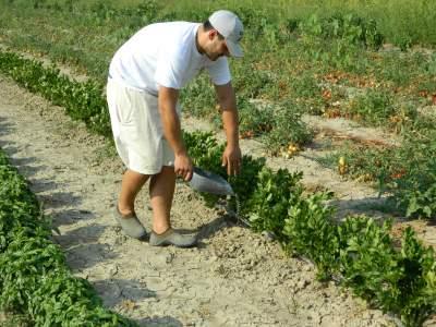 Formazione - Corso per Tecnico ispettore del biologico per le produzioni vegetali e animali