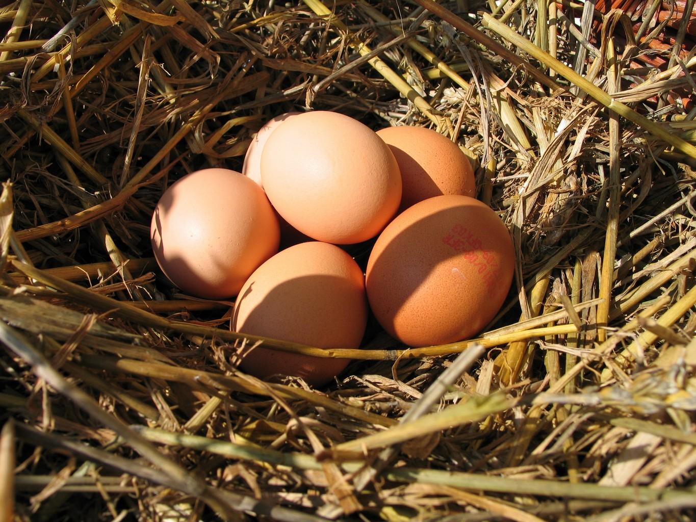 Queste uova sono italiane scritto sul guscio cucina for Oeuf de poule conservation
