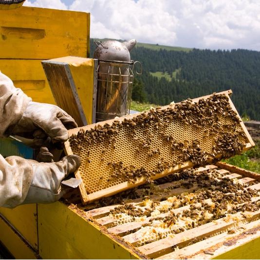 Pesticidi, api e non solo - L'UE rinnova lo stop ai neonicotinoidi almeno fino ad autunno 2017