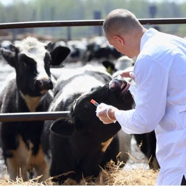 Ricerca - L'Omeopatia in veterinaria