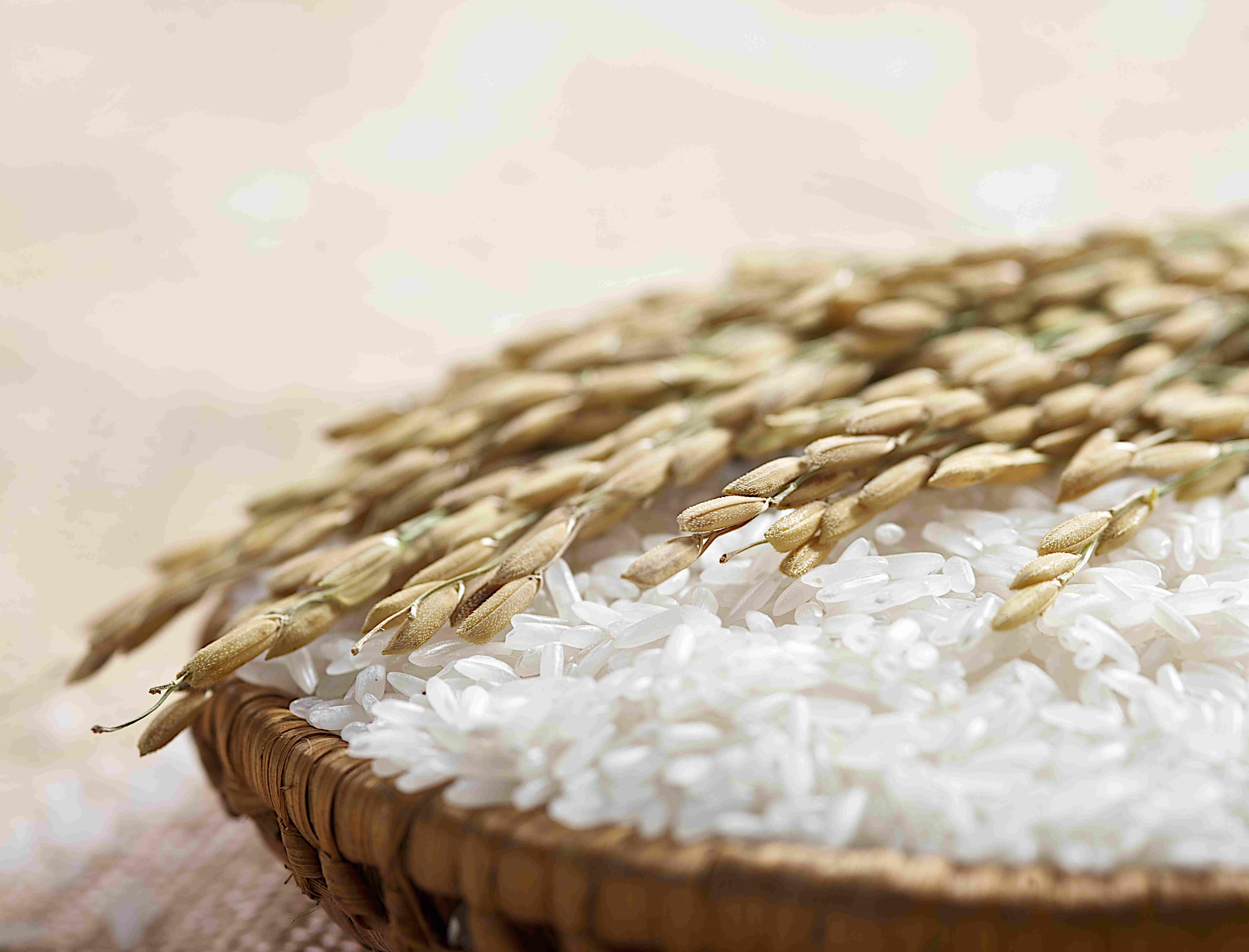 5 domande su... - Se il formaggio nasce dal riso