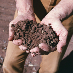 Agricoltura e ambiente - Biologico batte convenzionale 5 a 0