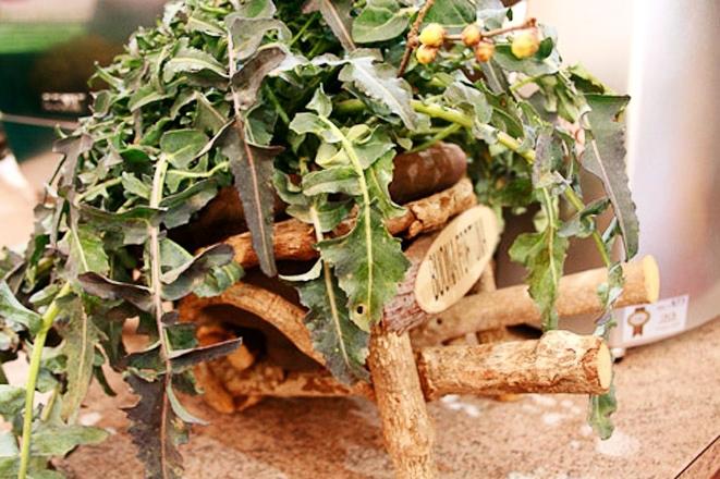Scoprire il broccolo fiolaro (VI)