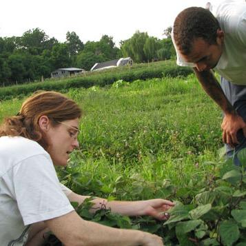 """Agricoltura biologica - FederBio: """"Come sempre siamo pronti per la riforma del sistema di certificazione"""""""