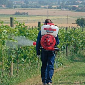 Ricerca - Per un'agricoltura biologica senza rame