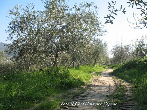 Strada oliveto