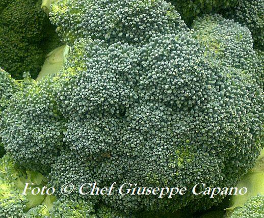 Broccoletti 518