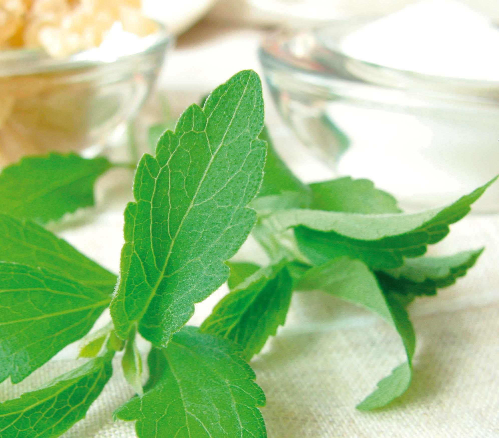 Stevia dolci foglie senza calorie cucina naturale for Stevia pianta