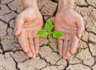 Mani che proteggono piantina su terra arida