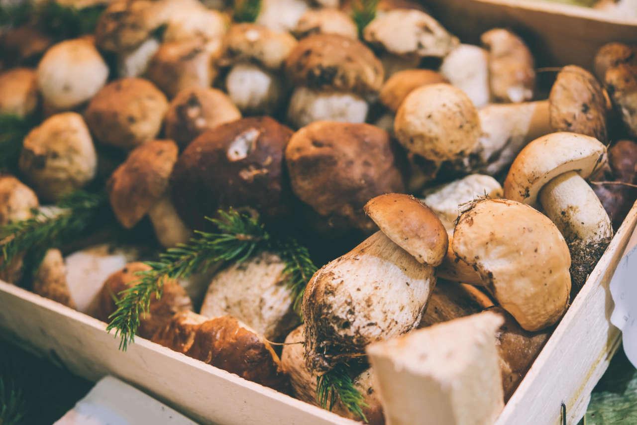 Sagra del fungo porcino (RI)