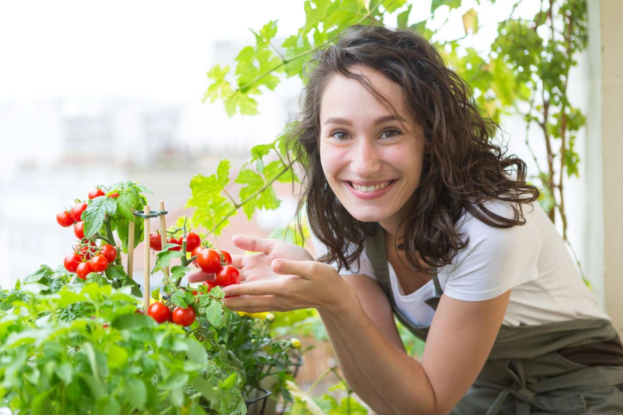 Come Coltivare Pomodori Sul Balcone pomodori sul balcone