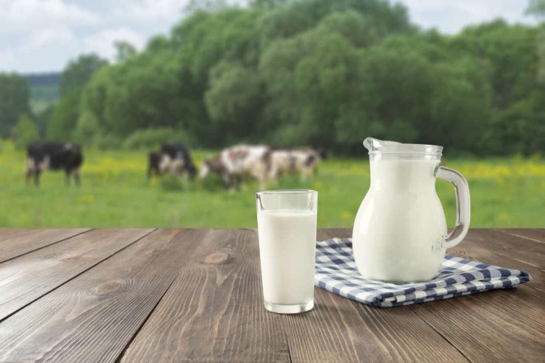 Bricco e bicchiere di latte con mandria