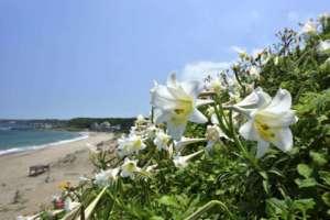 piante da mare
